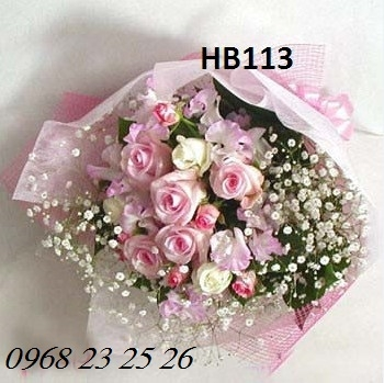hoa hb113
