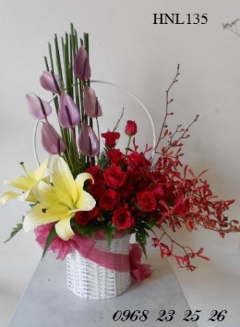 hoa hnl135