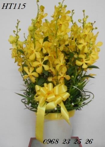 hoa ht115