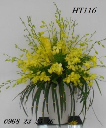 hoa ht116